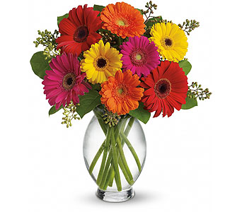 Teleflora's Gerbera Brights in Woodstock ON, Old Theatre Flowers
