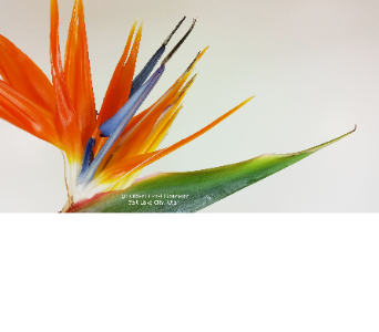 Birds of Paradise at Huddart Floral Company in Salt Lake City UT, Huddart Floral