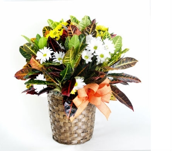 Green plant with fresh cuts in Nashville TN, Emma's Flowers & Gifts, Inc.