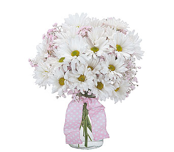 Baby Pink in Timmins ON, Timmins Flower Shop Inc.