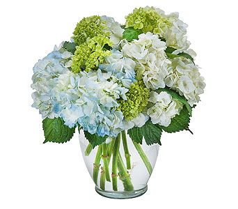 Southern Hospitality in Wake Forest NC, Wake Forest Florist