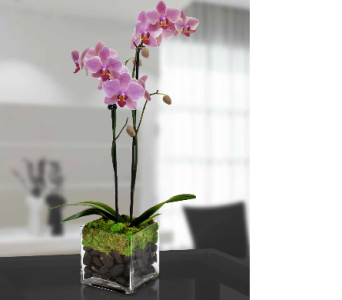 Modern Orchid Plant by Hoogasian HC5158 in San Francisco CA, Hoogasian Flowers