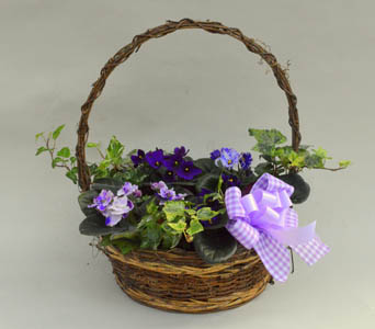 African Violet Basket  in Utica NY, Chester's Flower Shop And Greenhouses