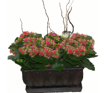 Carefree Kalanchoe Garden in Scarborough ON, Helen Blakey Flowers