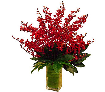 Red-Orange Mokara Orchids in San Antonio TX, Allen's Flowers & Gifts