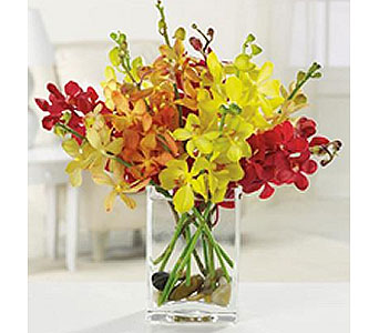 3 colors Mokara Orchids in San Antonio TX, Allen's Flowers & Gifts