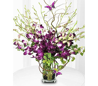 Purple Orchids w/Butterfly in San Antonio TX, Allen's Flowers & Gifts
