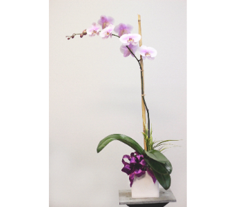 Orchid in a white cube in Wellington FL, Wellington Florist