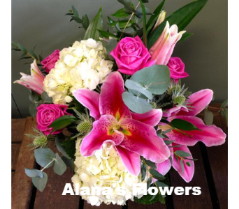 Stargazer in Etobicoke ON, Alana's Flowers & Gifts