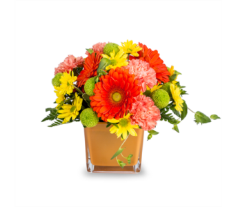 Truro florists flowers in truro ns jeans flowers and gifts citrus twist in truro ns jeans flowers and gifts negle Choice Image