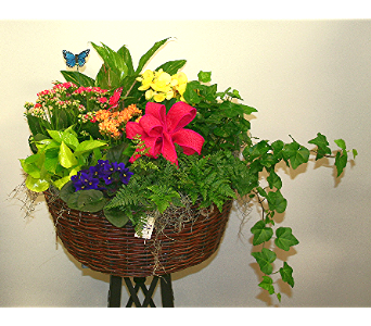 Large European Garden in Wellington FL, Wellington Florist