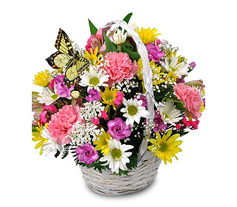 Butterfly Basket in Moline IL, K'nees Florists