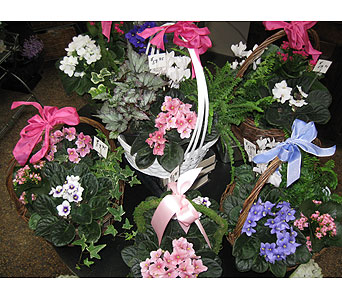Assorted Blooming Plant Baskets in Blue Bell PA, Country Flower Shoppe