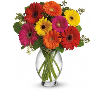 Gerbera Brights in Alliston, New Tecumseth ON, Bern's Flowers & Gifts