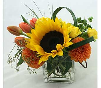 Believe in Rancho Santa Fe CA, Rancho Santa Fe Flowers And Gifts