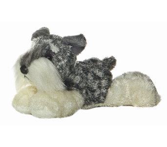 Miniature Schnauzer  in Guelph ON, Patti's Flower Boutique