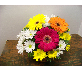 GERBERA DAISY BASKET in Claremont NH, Colonial Florist