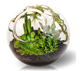 Emerald City Terrarium in Bradenton FL, Ms. Scarlett's Flowers & Gifts