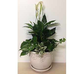 White & Ivy Ceramic Planter - 2 Sizes Available in Wyoming MI, Wyoming Stuyvesant Floral