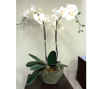 Double Faux Orchid  in Tampa FL, Buds, Blooms & Beyond