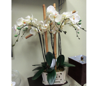 Faux Orchids with Bamboo in Tampa FL, Buds, Blooms & Beyond