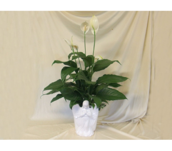 Angel Planter with Peace Lily in Hollidaysburg PA, Warner's Florist Gifts & Greenhouse