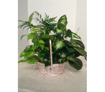 Basket Dishgarden in Gahanna OH, Rees Flowers & Gifts, Inc.