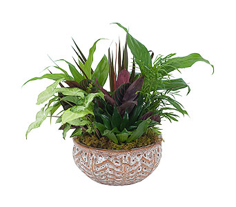 Ceramic Dish Garden in Wellington FL, Wellington Florist