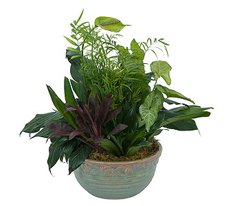 Medium Dish Garden in Wellington FL, Wellington Florist
