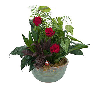 Dish Garden with Fresh in Wellington FL, Wellington Florist