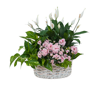 Living Blooming White Garden Basket in Dayton OH, Furst The Florist & Greenhouses
