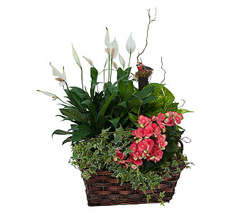 Living Blooming Garden Basket in Escondido CA, Rosemary-Duff Florist