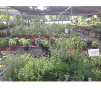Perennials in Fond Du Lac WI, Haentze Floral Co