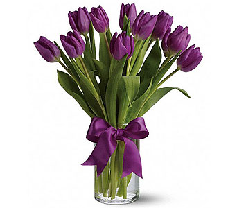 Spring Tulips - Purple