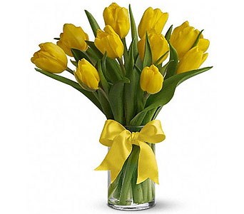 Spring Tulips - Yellow