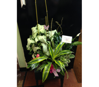 FBAS1 in Missouri City TX, Flowers By Adela