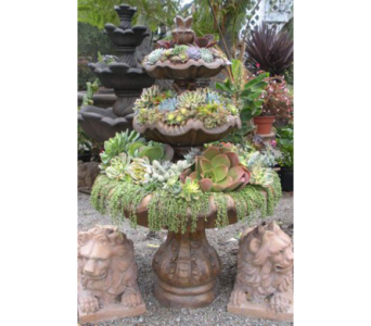 Custom Plant Designs in Bradenton FL, Ms. Scarlett's Flowers & Gifts