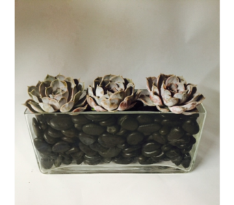 Echeveria's with Black Polished Stones in New York NY, Fellan Florists Floral Galleria