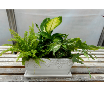 Ferny Moonstone Windowbox in Skowhegan ME, Boynton's Greenhouses, Inc.