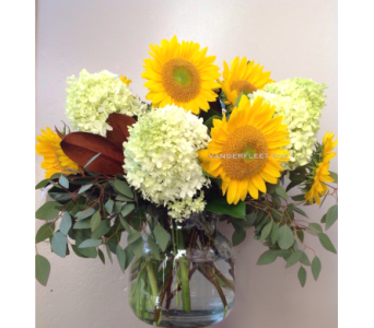 Sunflower Elegance in Etobicoke ON, VANDERFLEET Flowers