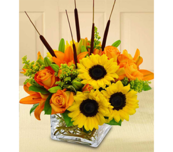 Splash of Autumn in Indianapolis IN, George Thomas Florist