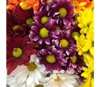 Dazzling Dasies! in Ajax ON, Reed's Florist Ltd
