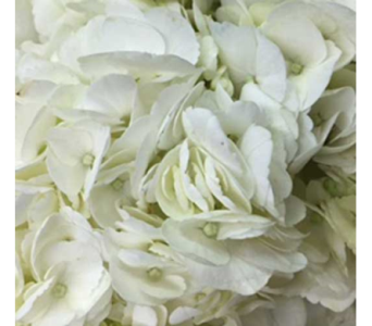 Hurray For Hydrangea! in Ajax ON, Reed's Florist Ltd