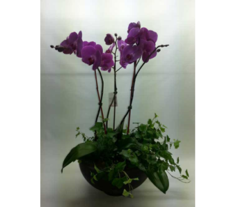 Divine purple orchid in Quincy MA, Fabiano Florist