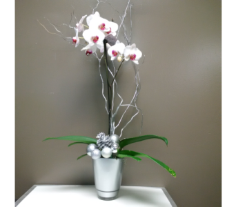 Christmas Orchid in Barrie ON, The Flower Place