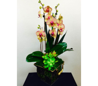 Orchids Garden in Lewisville TX, D.J. Flowers & Gifts