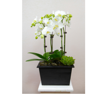 White Orchids Garden in Lewisville TX, D.J. Flowers & Gifts