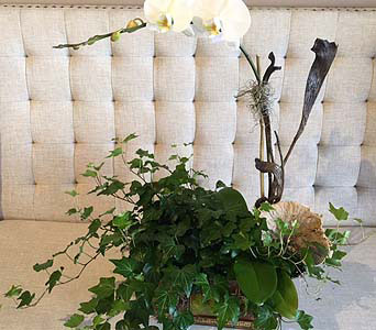 Orchid and Ivy Set in Charleston SC, Tiger Lily Florist Inc.