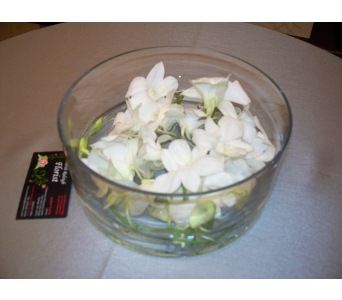 White Orchid Dish Centerpiece in Cary NC, Cary Florist