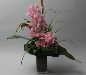 Pink Orchid Dreams in Scarborough ON, Brown's Flower Shop